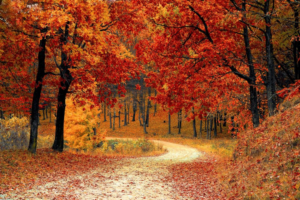 Five Things to Do with Your Kids This Autumn