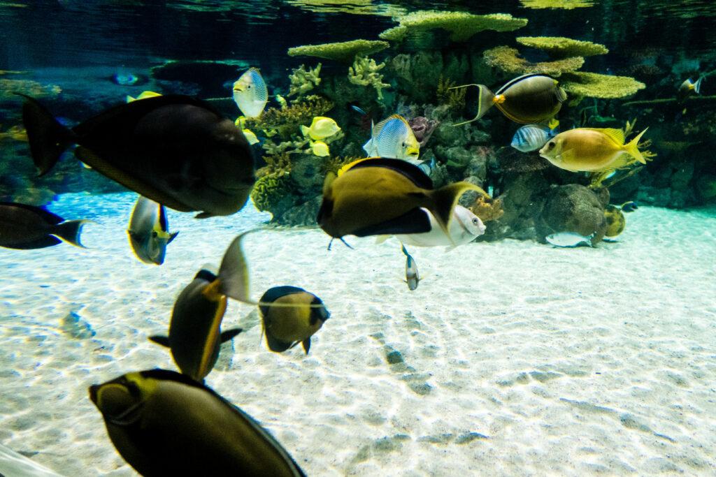 The deep aquarium close up of fish