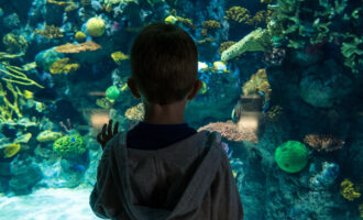 The back of my son looking into the aquarium. Get The Deep vouchers by reading this article