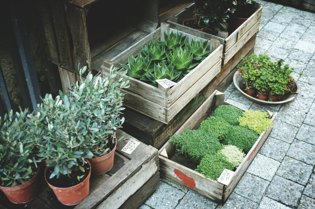Looking After Your Garden Paving